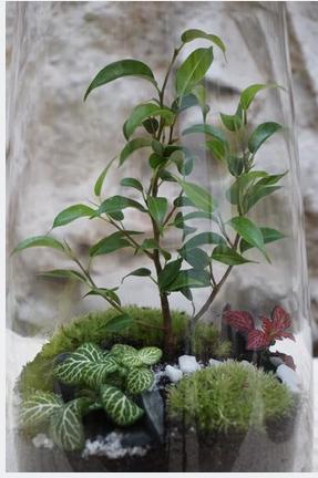 terrarium création escapade artisanale