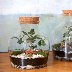 AP2M Escapade artisanale terrarium création végétale